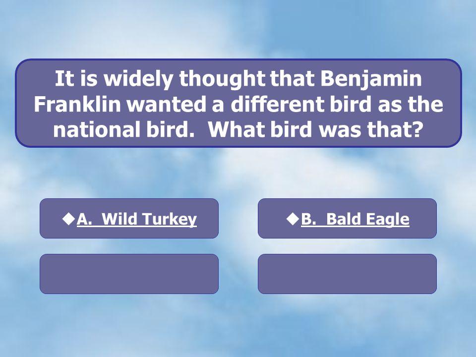 A. Wild Turkey