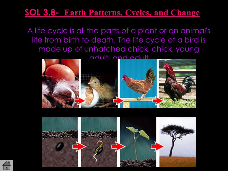 SOL 3.8- Earth Patterns, Cycles, and Change A life cycle is all the parts of a plant or an animal's life from birth to death. The life cycle of a bird