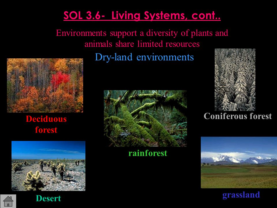 SOL 3.6- Living Systems, cont.. Environments support a diversity of plants and animals share limited resources Dry-land environments Deciduous forest