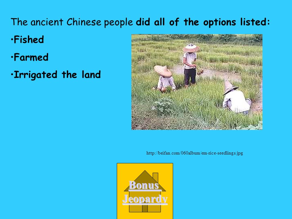 A all of the ones listed The ancient Chinese people_______. D irrigated the land C farmed B fished http://beifan.com/060album/em-rice-seedlings.jpg
