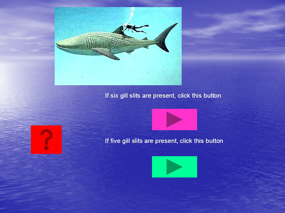 If six gill slits are present, click this button If five gill slits are present, click this button