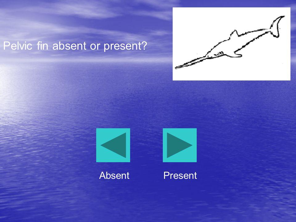 Pelvic fin absent or present? AbsentPresent