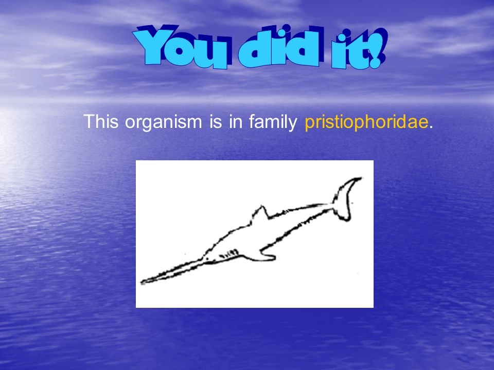 This organism is in family pristiophoridae.