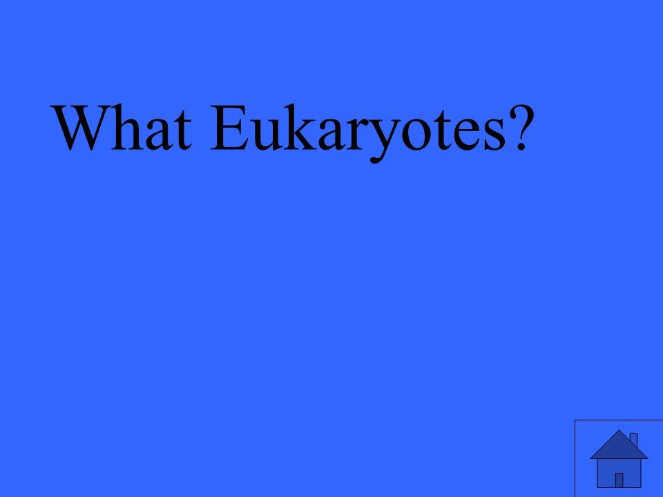 What Eukaryotes?