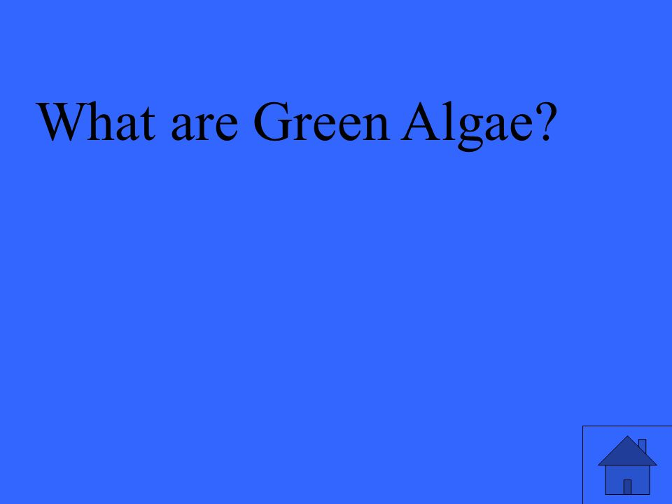 What are Green Algae