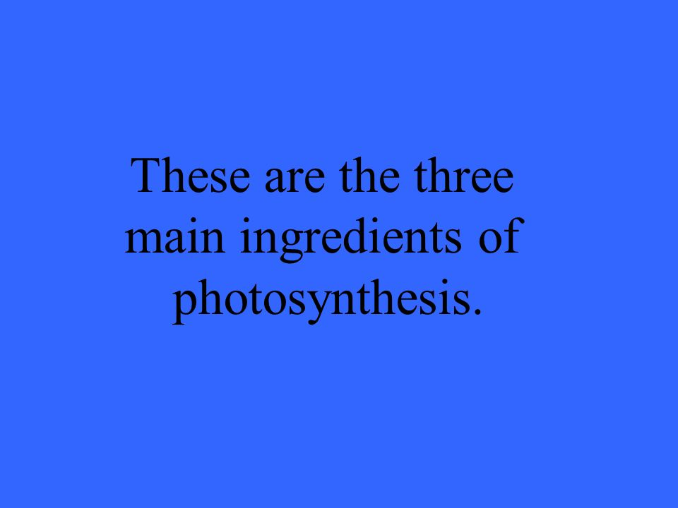 These are the three main ingredients of photosynthesis.