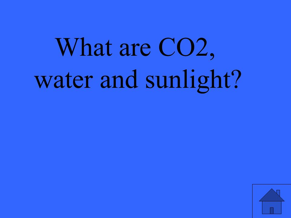 What are CO2, water and sunlight