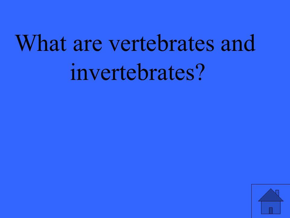 What are vertebrates and invertebrates?