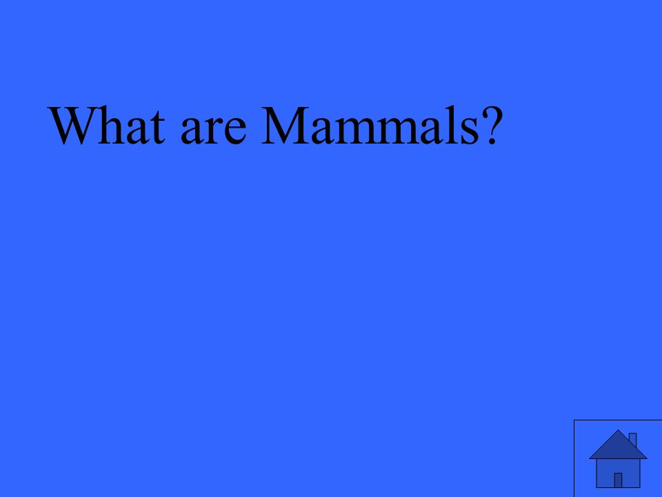 What are Mammals