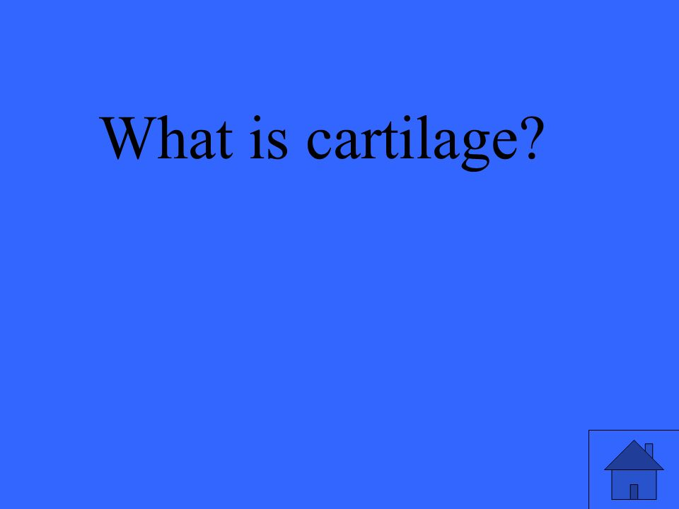 What is cartilage