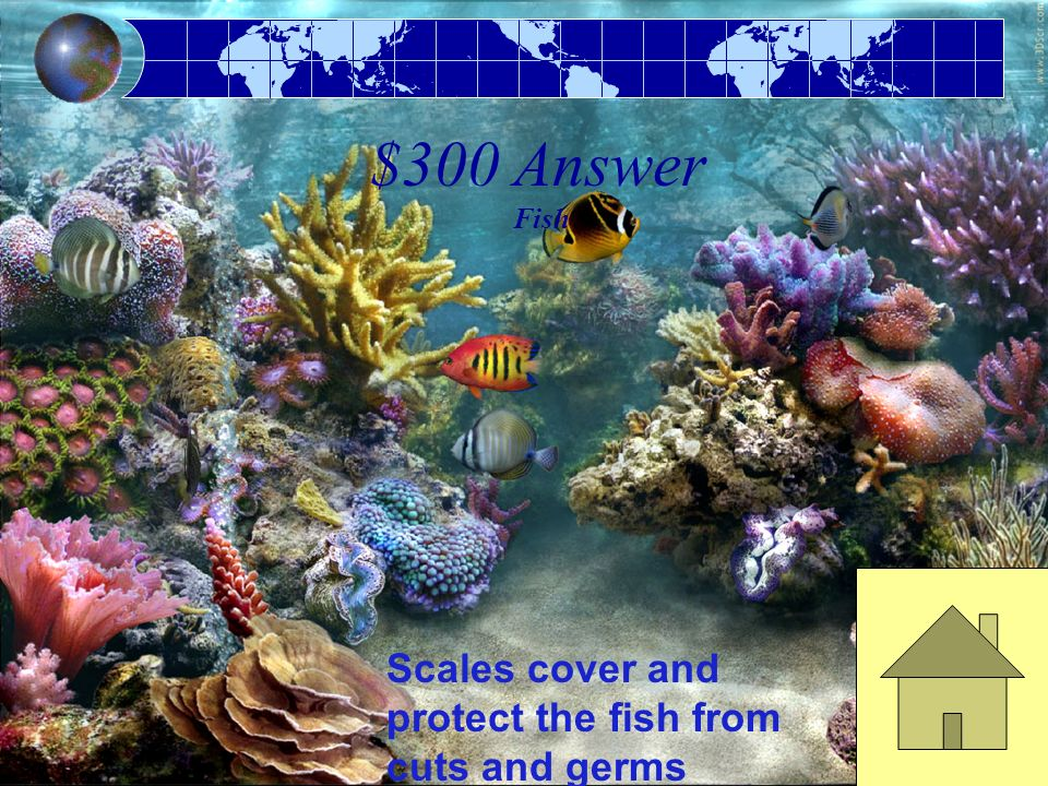 $300 Question Fish This body covering protects the fish from cuts and germs.