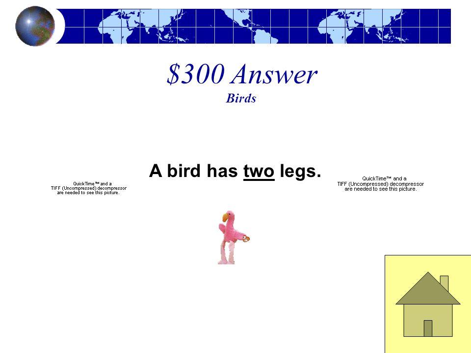 $300 Question Birds A bird has ____ legs.