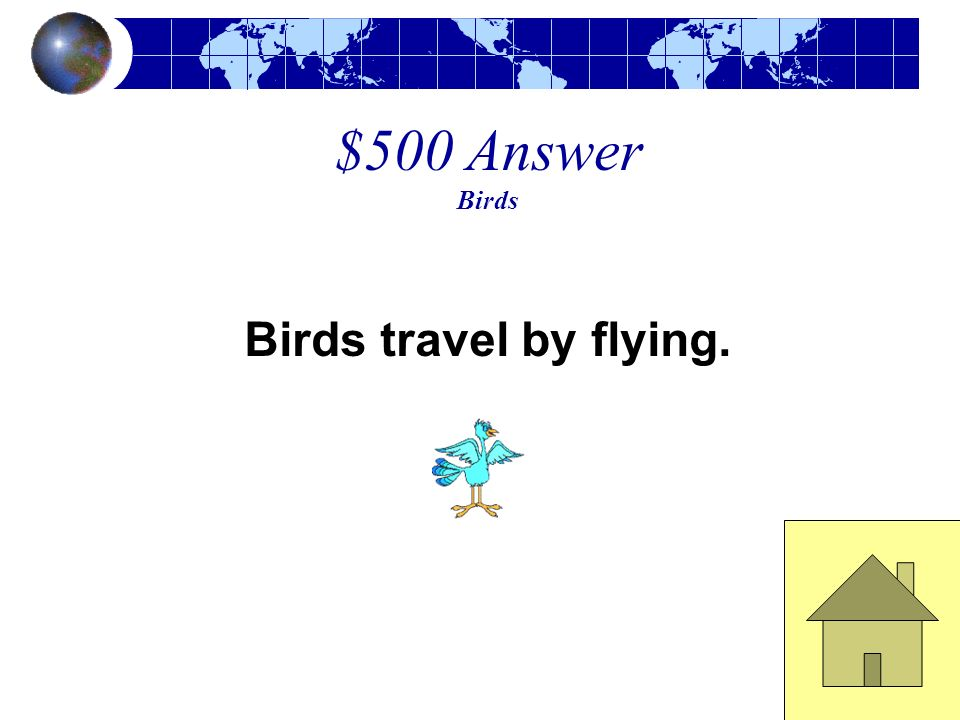 $500 Question Birds How to birds travel?