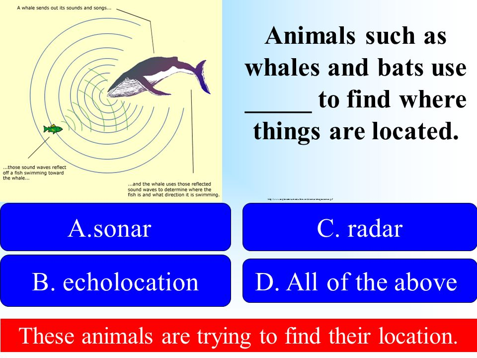 50:50 Give Hint. Animals such as whales and bats use _____ to find where things are located.