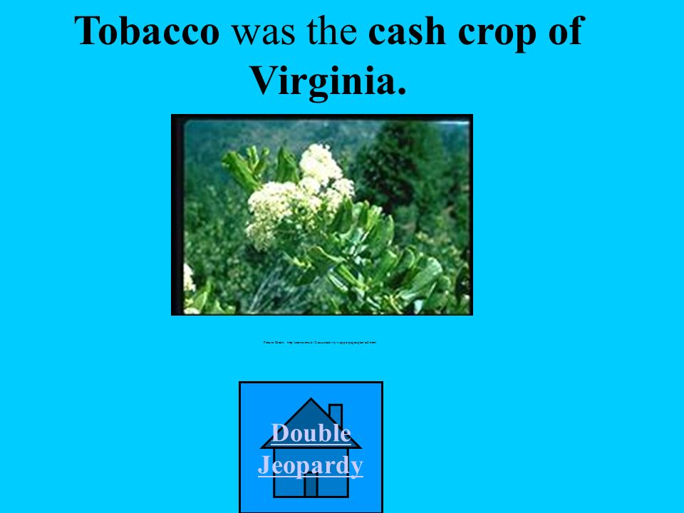 ____________ was the cash crop of Virginia. A. rice D.