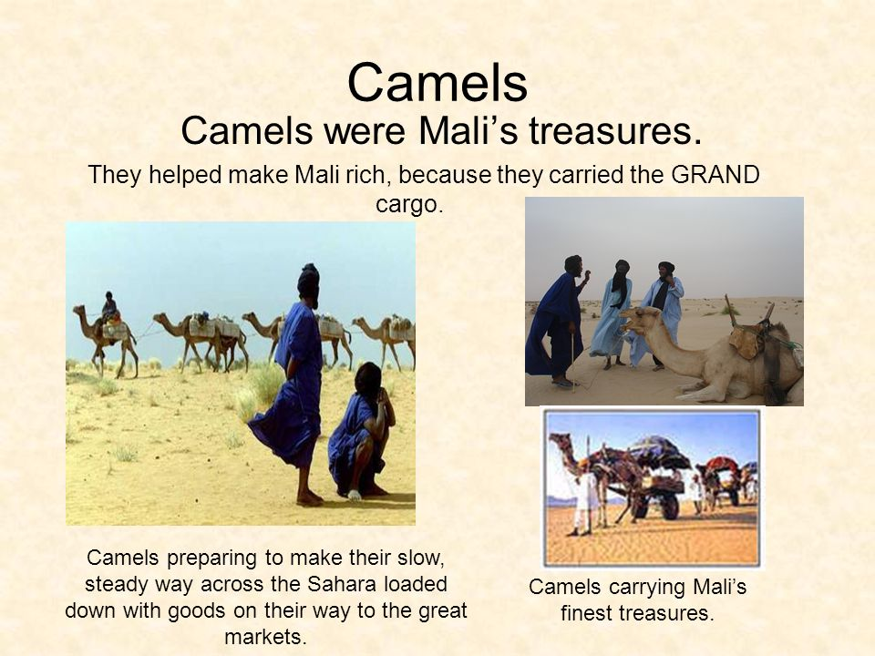 Camels Camels were Malis treasures.