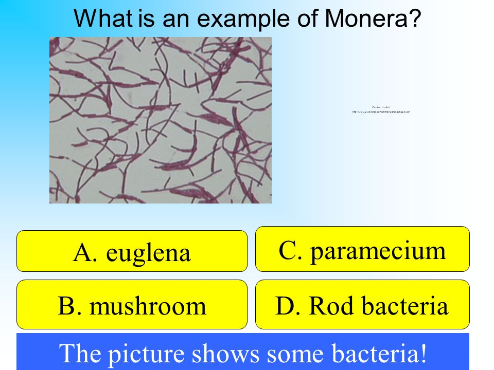 50:50 Give Hint! A. euglena B. mushroomD. Rod bacteria C. paramecium What is an example of Monera? Picture Credit: http://www.uwinnipeg.ca/~simmons/im