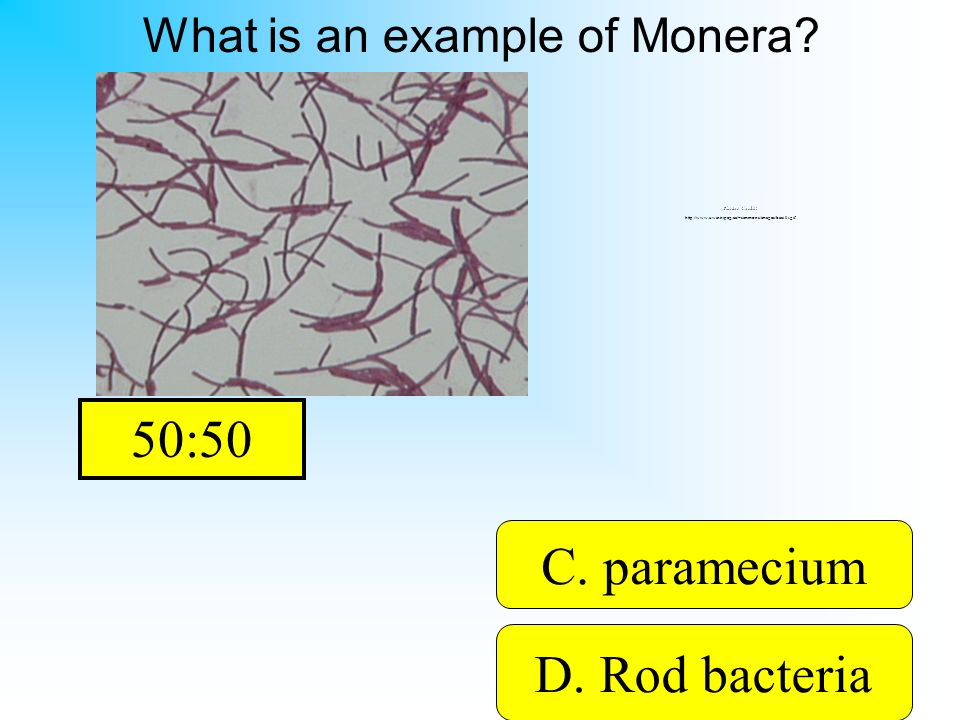 The picture shows some bacteria! A. euglena B. mushroomD. Rod bacteria C. paramecium What is an example of Monera? Picture Credit: http://www.uwinnipe