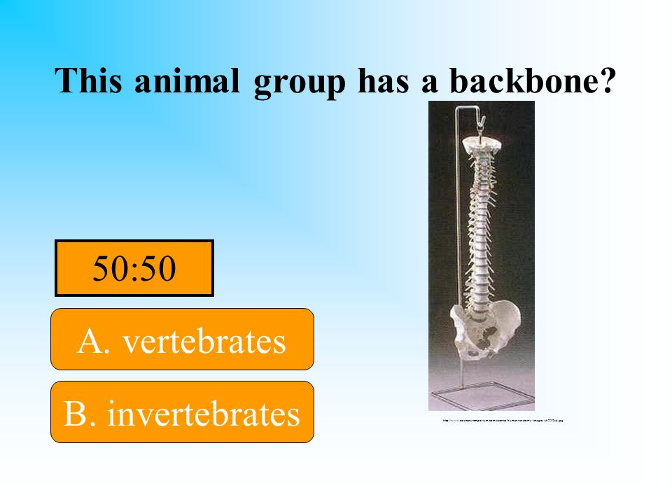 Humans belong in this group! This animal group has a backbone? A. vertebrates B. invertebratesD. nonvascular C. vascular http://www.einsteins-emporium