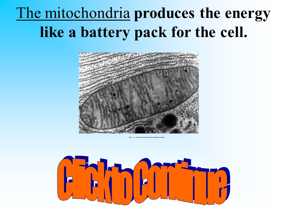 You have 10 seconds to ask someone sitting beside you for help! Which part of the cell produces the energy like a battery pack? A. nucleus B. mitochon