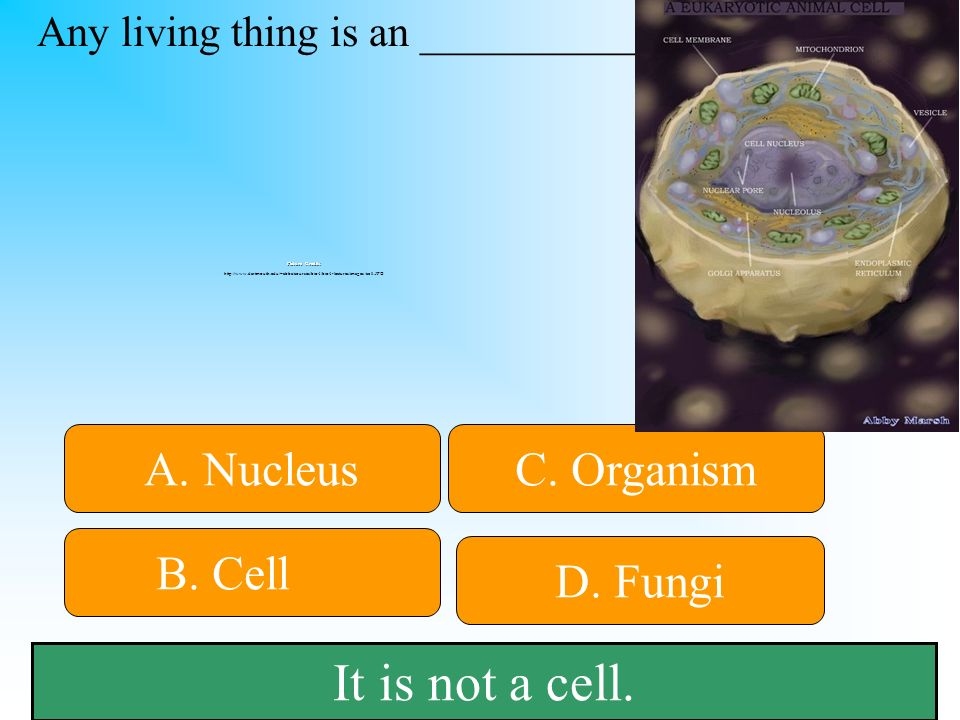 It is not a cell.B. Cell C. Organism D. Fungi A. Nucleus Any living thing is an ___________.