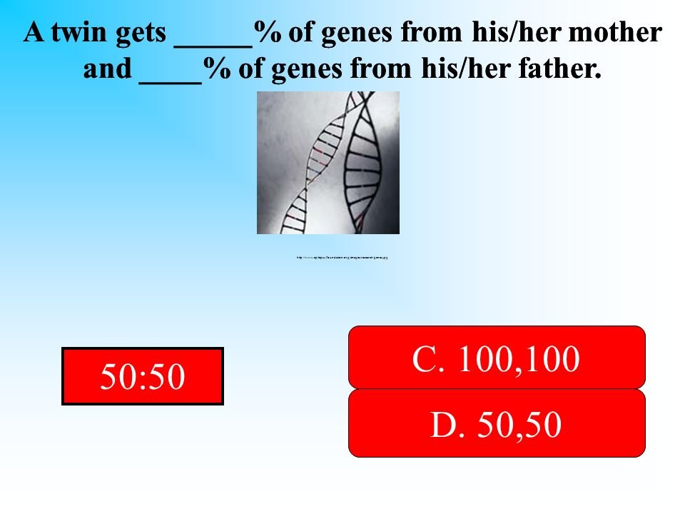 It is an even amount for both parents! A twin gets _____% of genes from his/her mother and ____% of genes from his/her father. A. 0,0 B. 60, 40D. 50,5