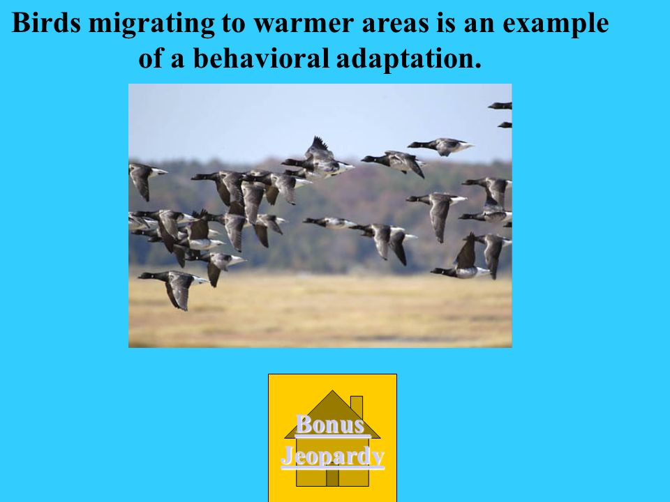 Many birds migrate to warmer areas for the winter. What kind of adaptation is this? B. behavior D. learned C. physical A. structural