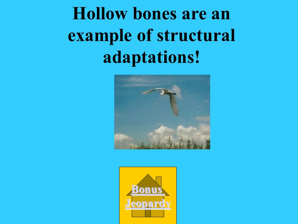 Birds have hollow bones so that they are lighter and can fly easier. What kind of adaptation is this? B. Structural adaptation C. Learned behavior D.