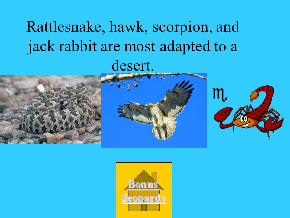 Which group of animals would be most adapted to a desert? B. bobcat, oak tree Maple tree, squirrel C. frog, turtle Lily pads, beaver D. whale, kelp Sq