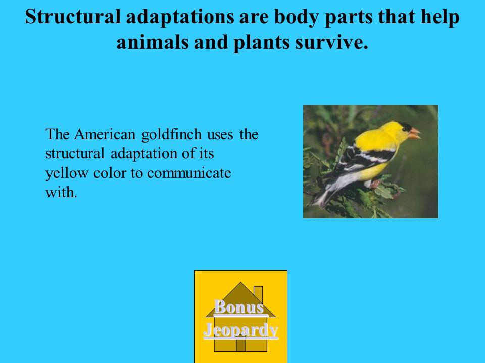 An animals job is called its niche! Bonus Jeopardy