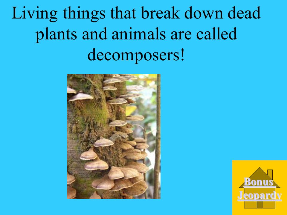 Living things that break down dead plants and animals are called: A. Decomposers B. Consumers C. Producers D. Niche