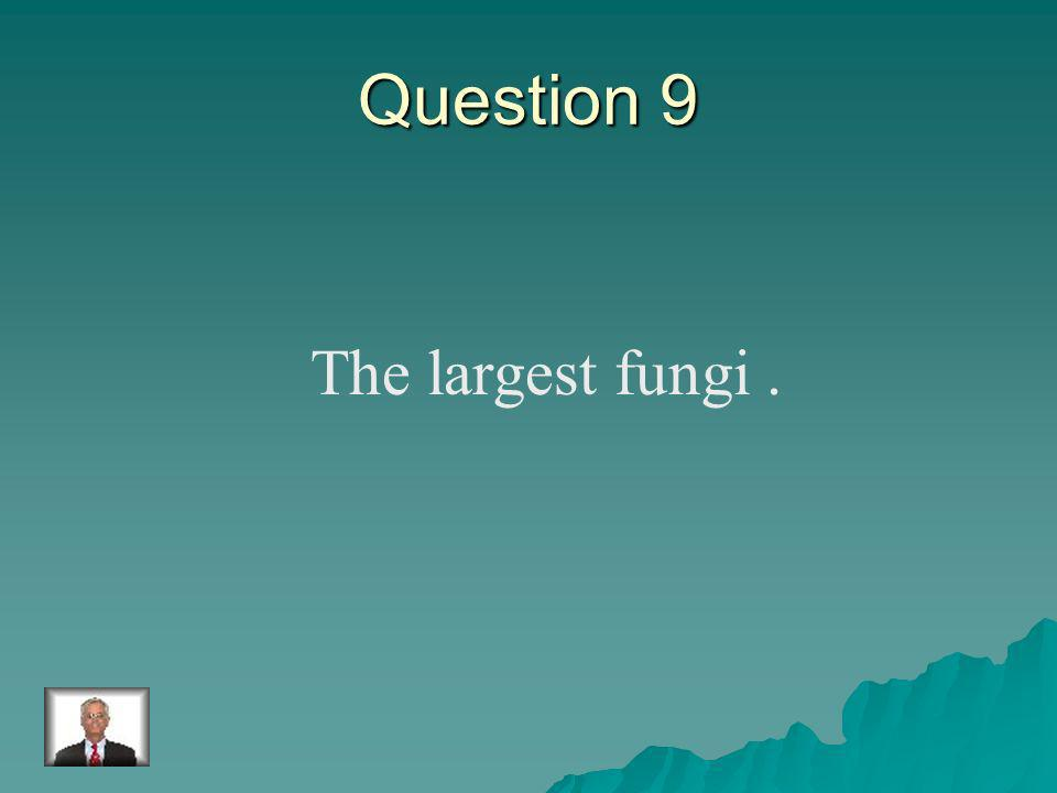 Answer 8 What is – spores