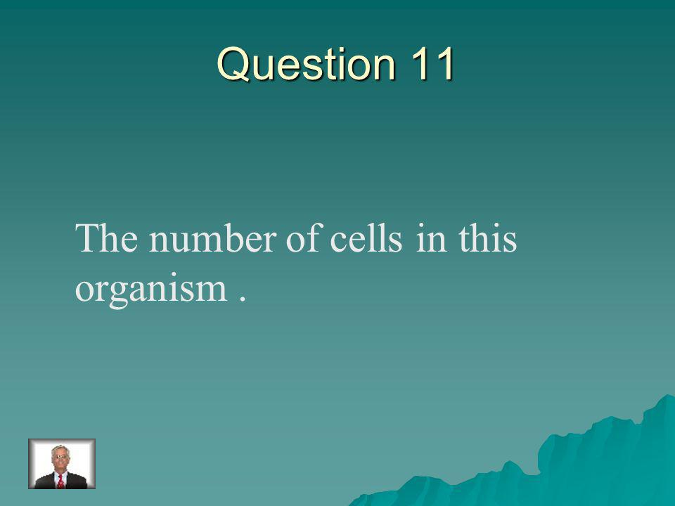 Answer 10 What is – mold