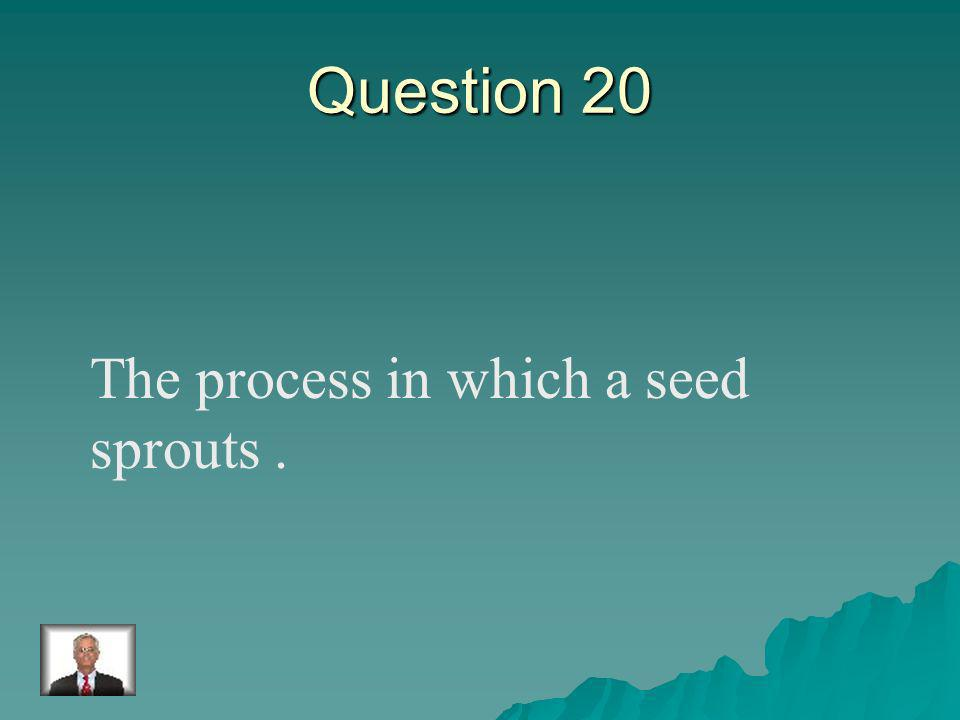 Answer 19 What is – pollination