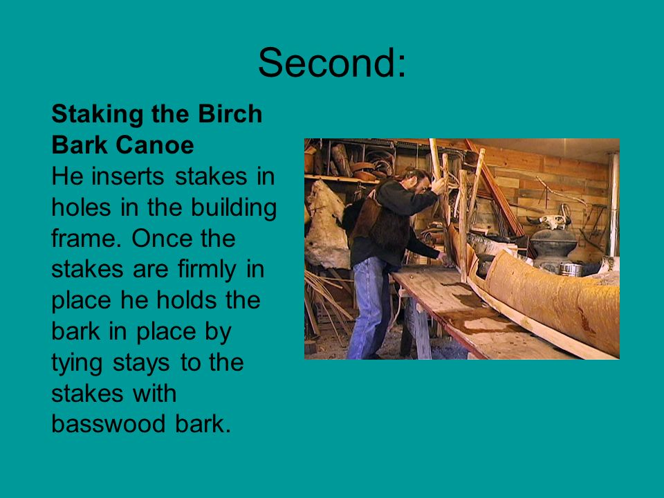 Second: Staking the Birch Bark Canoe He inserts stakes in holes in the building frame. Once the stakes are firmly in place he holds the bark in place