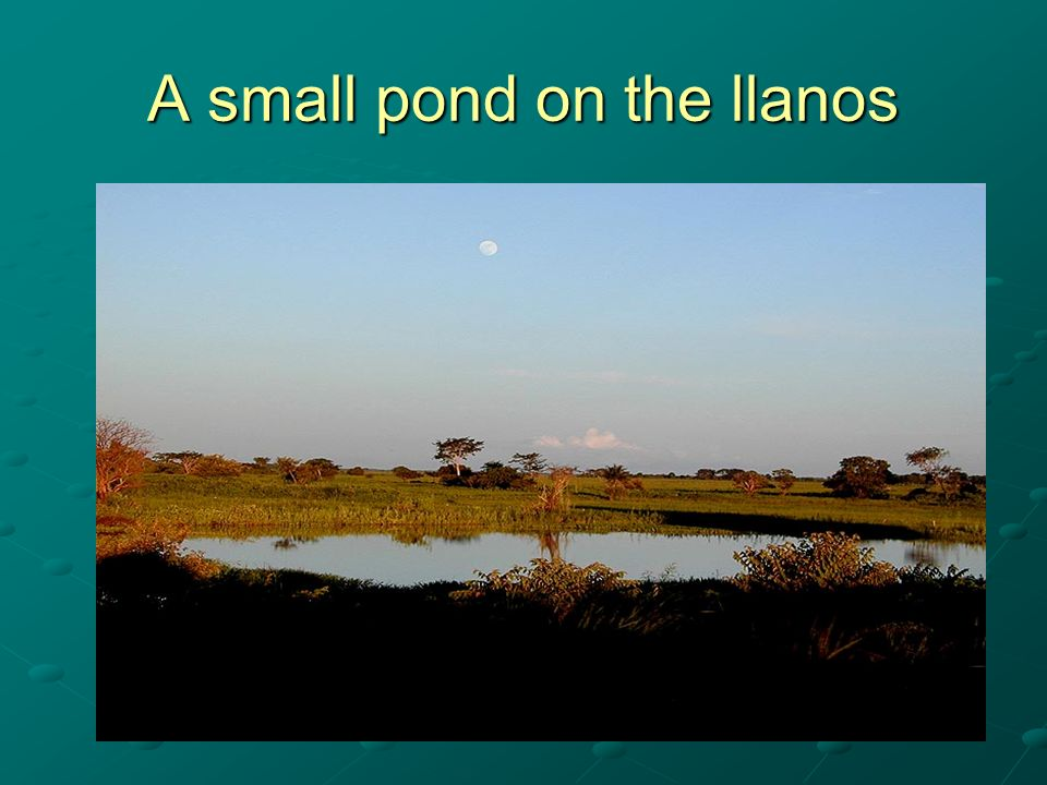 A small pond on the llanos