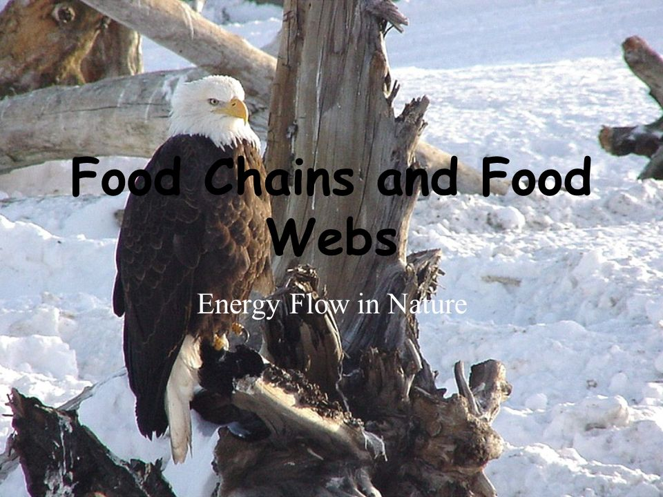 Food Chains and Food Webs Energy Flow in Nature