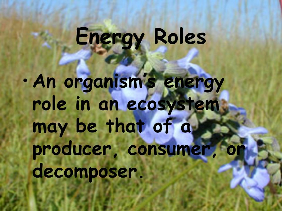 Energy Roles An organisms energy role in an ecosystem may be that of a producer, consumer, or decomposer.