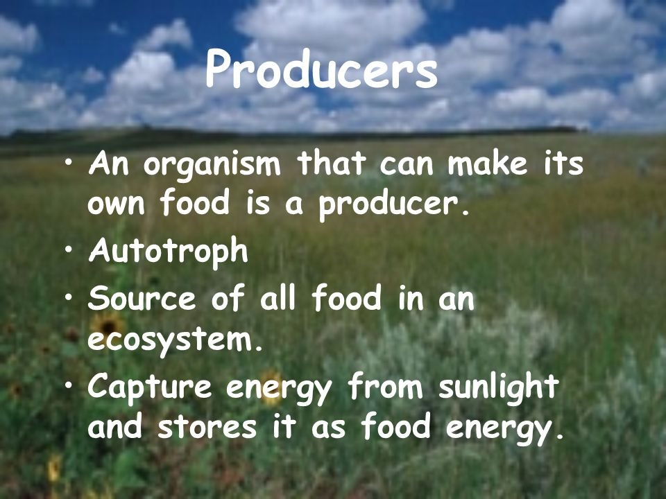 Producers An organism that can make its own food is a producer. Autotroph Source of all food in an ecosystem. Capture energy from sunlight and stores