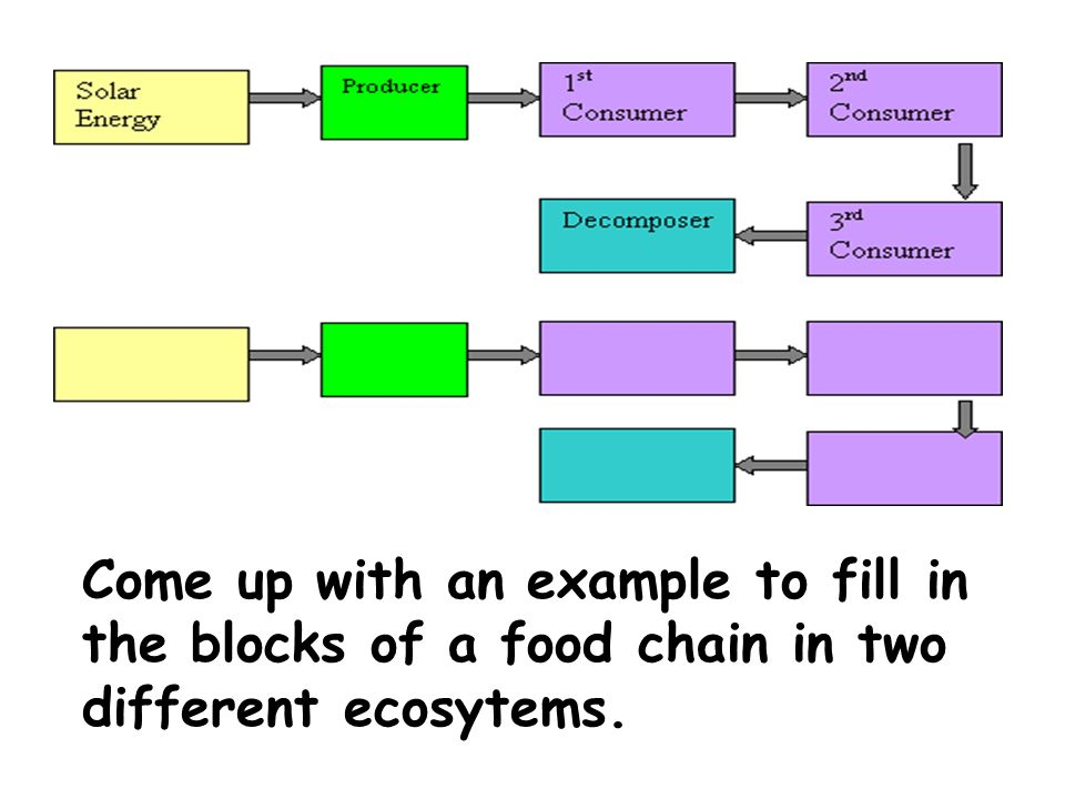 Come up with an example to fill in the blocks of a food chain in two different ecosytems.