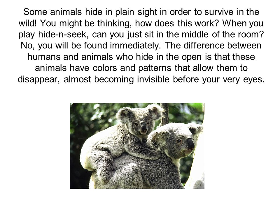 Some animals hide in plain sight in order to survive in the wild! You might be thinking, how does this work? When you play hide-n-seek, can you just s