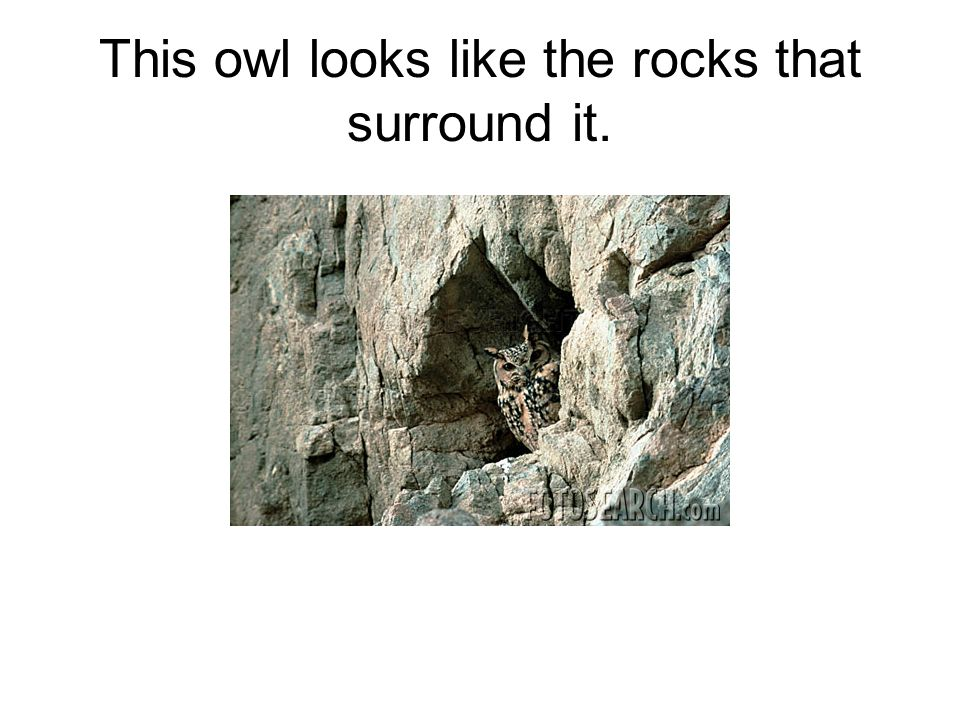 This owl looks like the rocks that surround it.