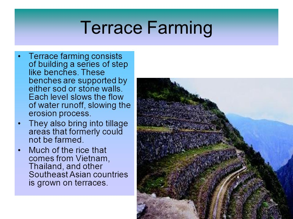 Terrace Farming Terrace farming consists of building a series of step like benches.