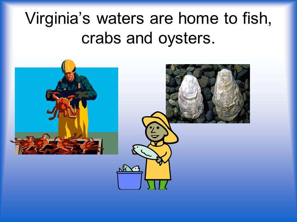 Virginias waters are home to fish, crabs and oysters.