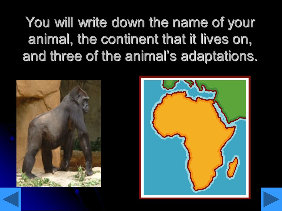 You will write down the name of your animal, the continent that it lives on, and three of the animals adaptations.