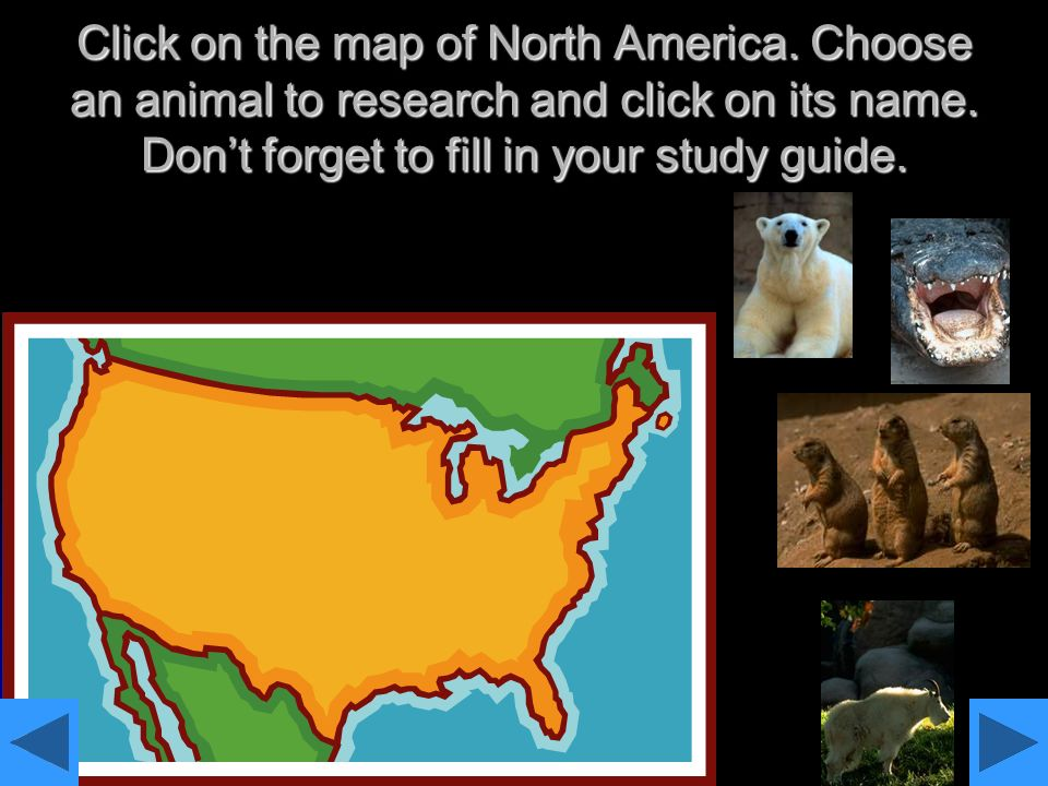 Click on the map of North America. Choose an animal to research and click on its name. Dont forget to fill in your study guide.