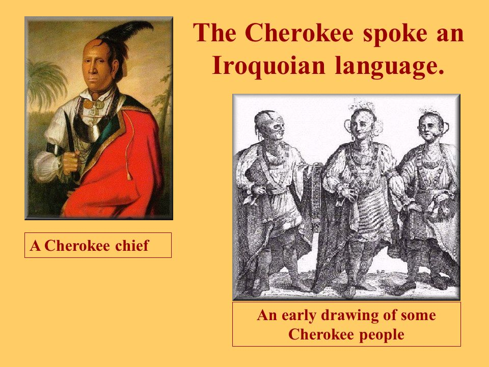 There was a tribe in the Allegheny (Appalachian) Plateau. This tribe was called the Cherokee. The Allegheny (Appalachian) Plateau
