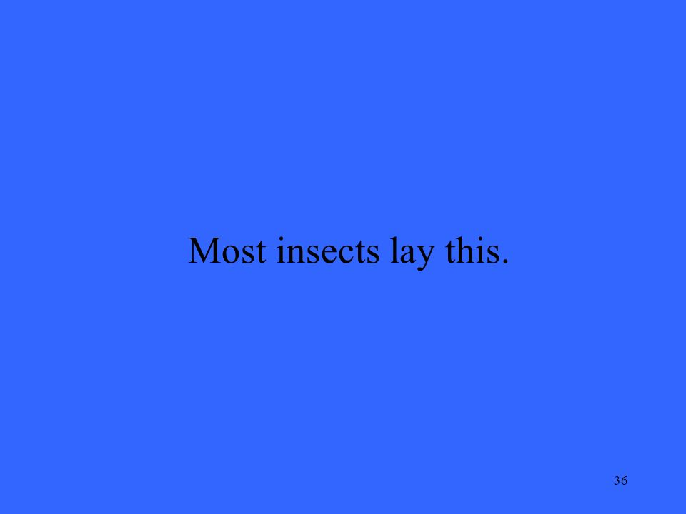 36 Most insects lay this.