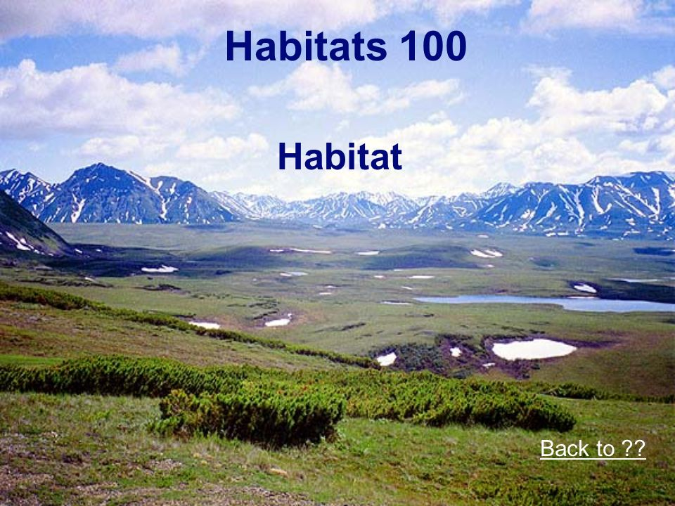 Habitats 100 Habitat Back to