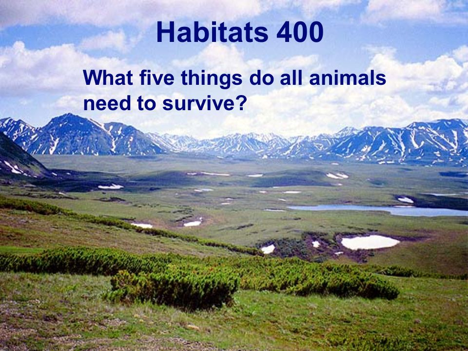 Habitats 400 What five things do all animals need to survive